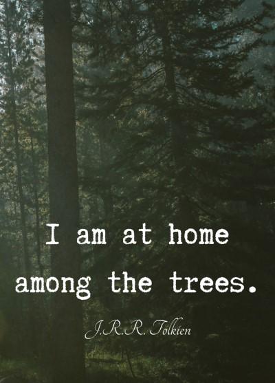 trees (2)